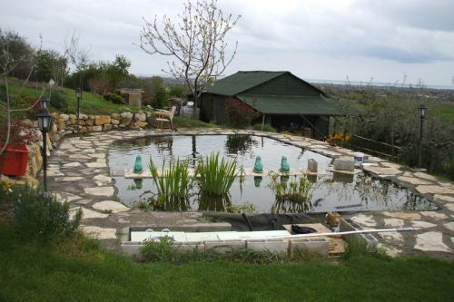 Allevamento koi giapponesi e laghetti koi giardino for Laghetti ornamentali